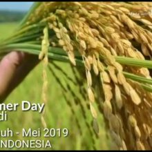 Field Farmer Day – Padang, Sumatera Barat